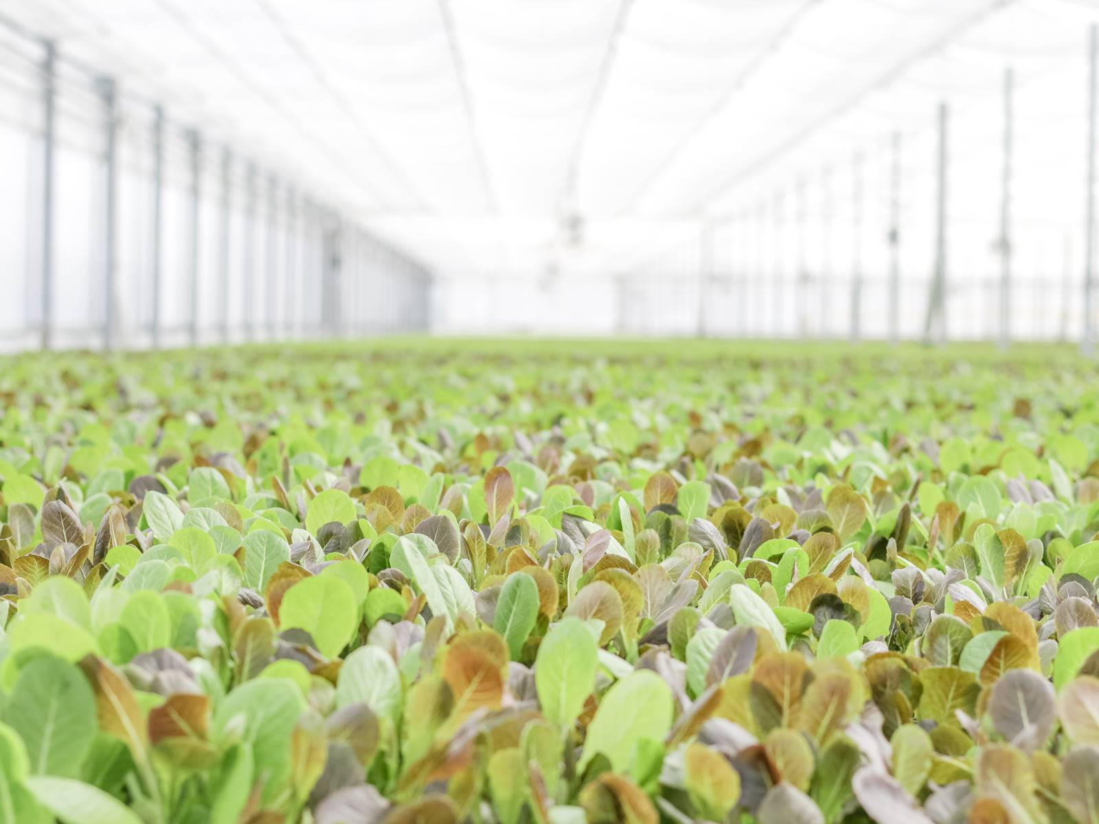 how we do it picture of hydroponic operation